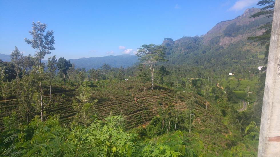Panorami_hillcountry_srilanka