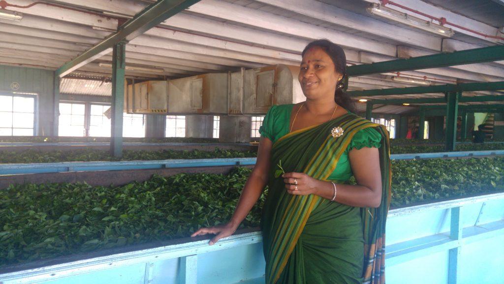 Fabbrica-di-tè_srilanka_ceylonroots