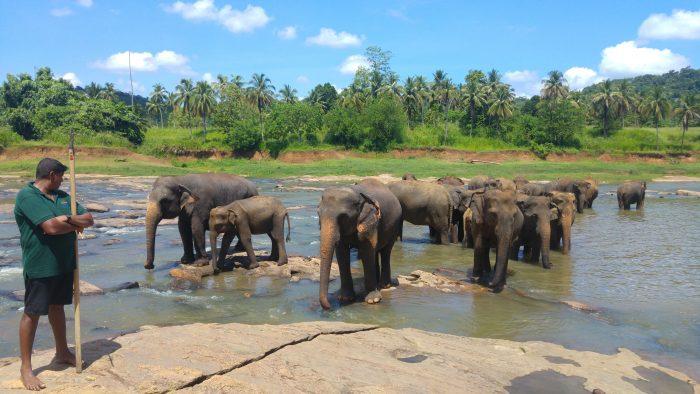 dove vedere gli elefanti in Sri Lanka