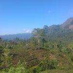 El té de Sri Lanka: la felicidad en verde esmeralda