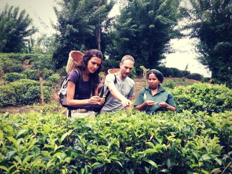 tè-srilanka-ceylonroots-5