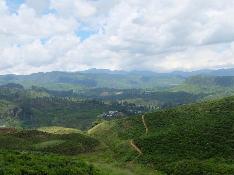 tè-srilanka-ceylonroots